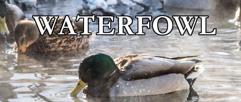 waterfowl-choke-tubes